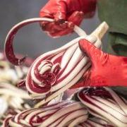 preparazione-radicchio-rosso-treviso-igp-4